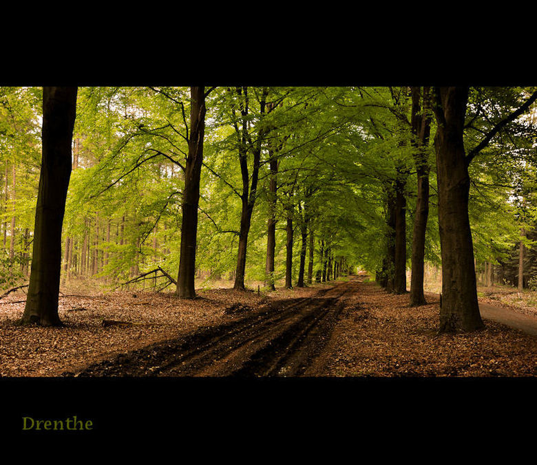 Drenthe - bos bij gasselte.