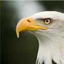 Roofvogelfotografie workshop 26 maart 2011