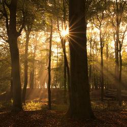 Goodmorning Sunshine......