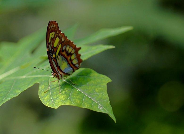 Vlinder - Foto gemaakt in de Vlindertuin van Artis.