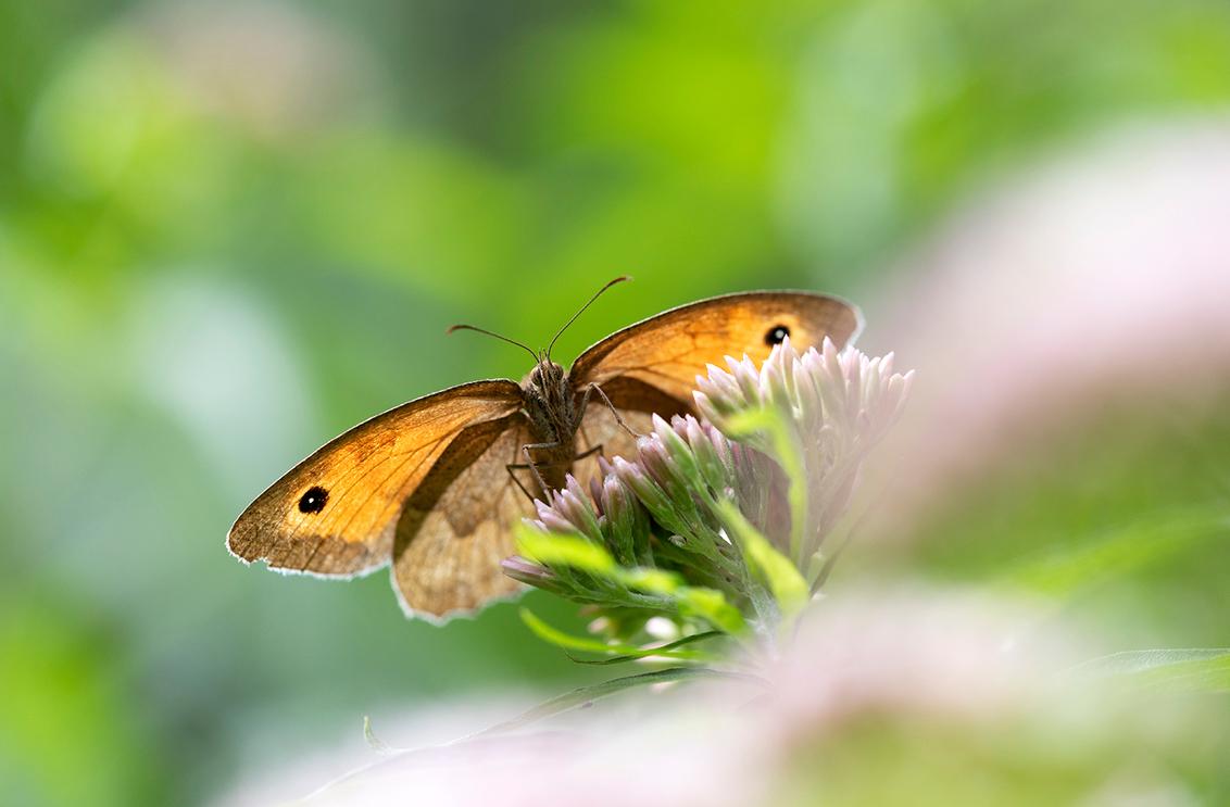 Zo mooi het licht door mijn vleugels