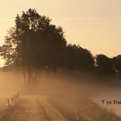 natuur Tys Damhuis  (87)