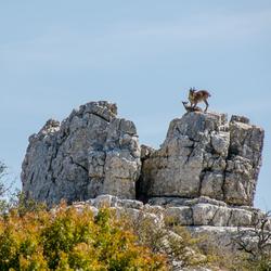 El Torcal de Antequera - steenbokken in het unieke natuurpark in Spanje