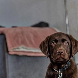 Portret van een pup