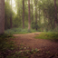 Het Lage Bergsche bos