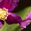 macro bloem