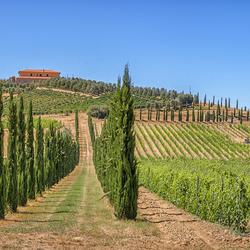 Terra Toscane