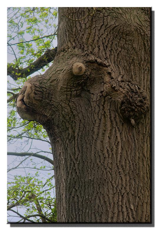 houten hond.jpg - Honds brutale boom.<br /> Niet de mooiste foto, maar toch wel grappig.