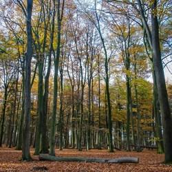 Landgoed Gorp en Roovert in herfstkleuren.