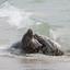 Zeehondjes kijken