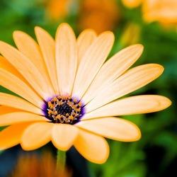 hd-bloemen-wallpaper-met-een-mooie-oranje-bloem-achtergrond-met-oranje-bloem-foto1