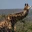 Djoser-Hlehlewe Np Zuid Afrika