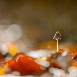 Net boven het bladerdek