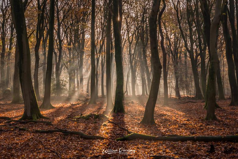 Speulderbos 2019 - Het zonlicht door de bomen in het Speulderbos.