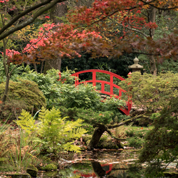 Japanse Tuin-2