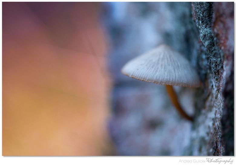Treetrunk hideout - Nog een uit het archief. Dit paddenstoeltje hing aan een afgekapte boomstronk in het leersumse veld. De mooie kleuren van het mos