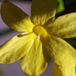 klein bloempje