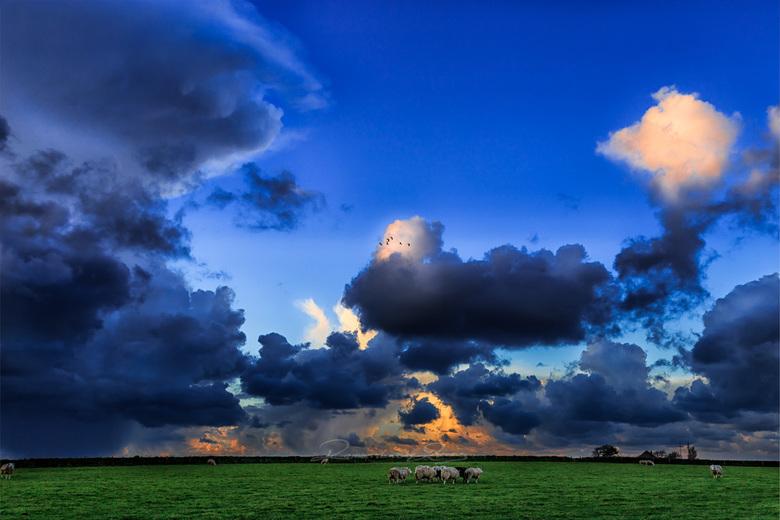 schapen en wolken