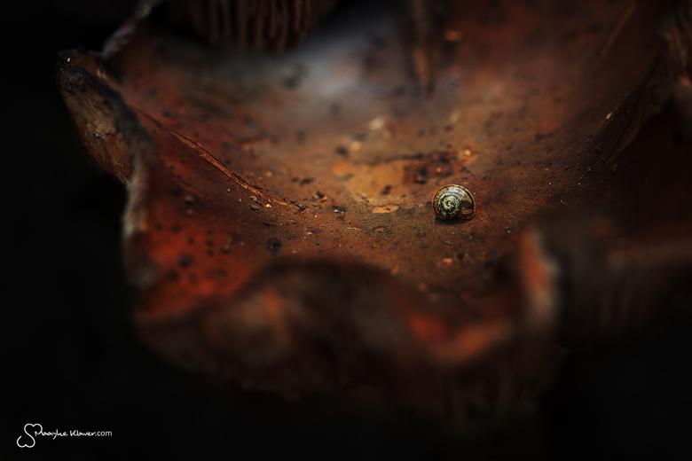 Slakje - Slakje op een paddestoel bij Amelisweerd.