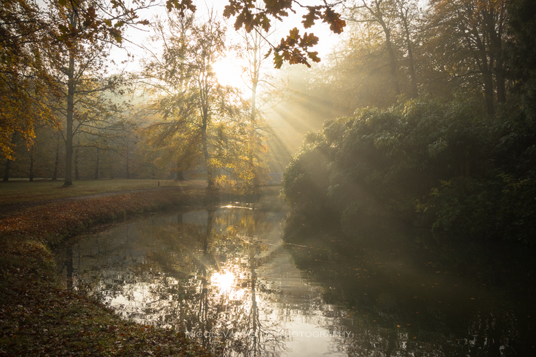 Sunrays. - Landgoed Elswout, zonneharpen tussen de bomen door.