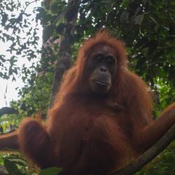 Sumatra 5