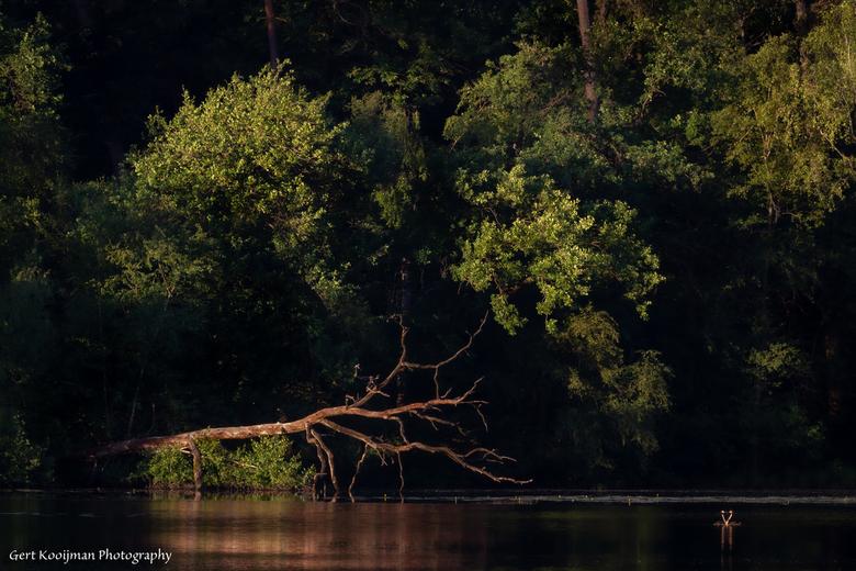 Grote Goorven  - Ochtendzon in natuurgebied Kampina bij Oisterwijk
