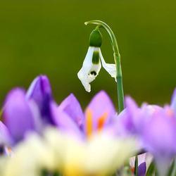 Hallo lente kom maar gauw