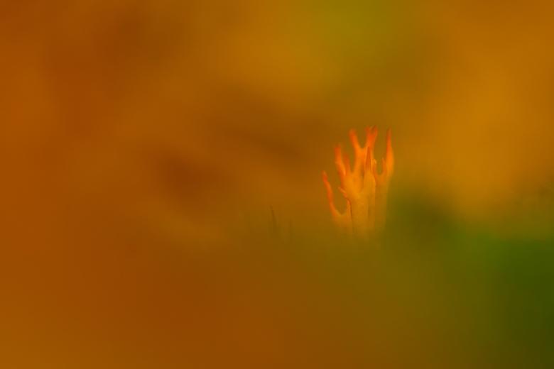 Vlammend oranje