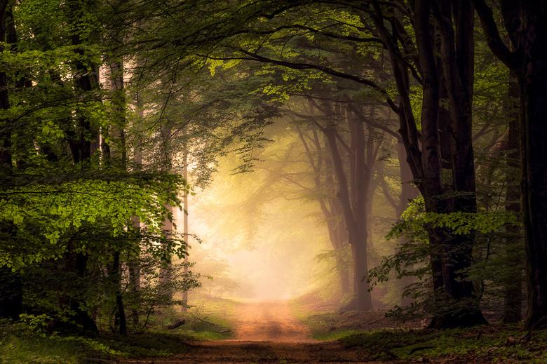 Bospad IX - Een ochtend in het Speulderbos, de Veluwe, Nederland.