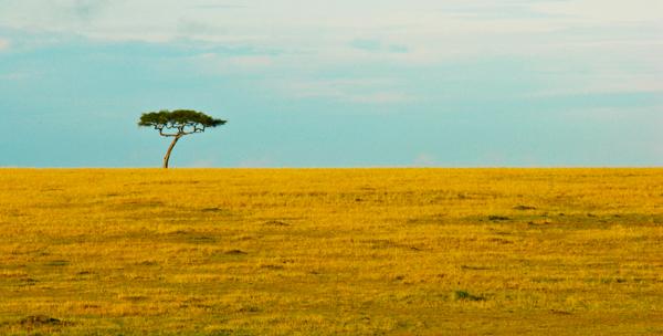 De onmetelijke leegte van de Serengeti -
