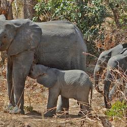 Olifanten familie.jpg
