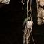 Voedende Kolibrie