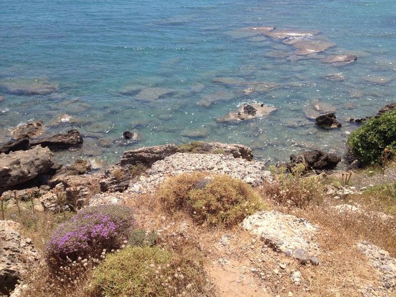 Bloemen aan de zee -