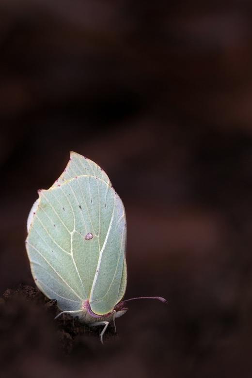 Frozen butterfly 2