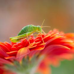 Net niet verdwijnen in de prachtige kleuren van de margriet