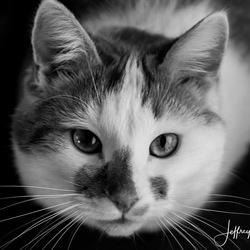 Kat kijkt aandoenlijk in de lens