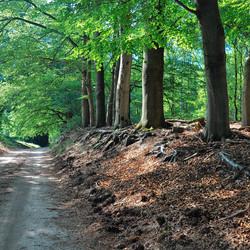 het bos en de weg