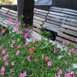 Bloemen buiten