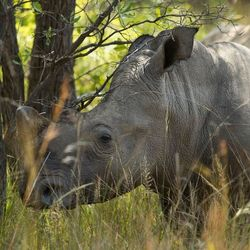Rhino wandelsafari