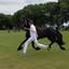 Man en paard in zweefstand