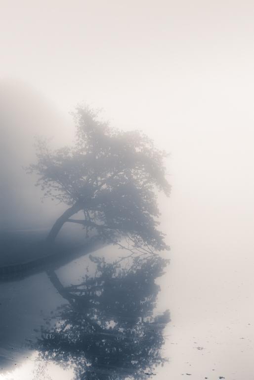 Sfeerplaatje in het park - Je neemt een mistige morgen, de doorkomende zon op een vroege ochtend en je beleef een geweldige ochtend met je camera.<img