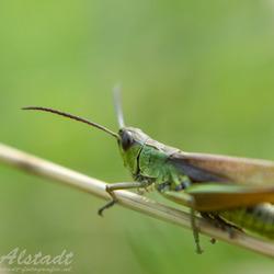 Relaxing grasshopper