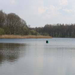 Vijver in Natuurpark Lelystad