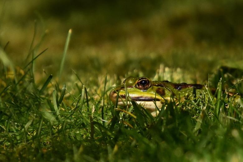 The green, green grass of home - Lekker luieren in het gras