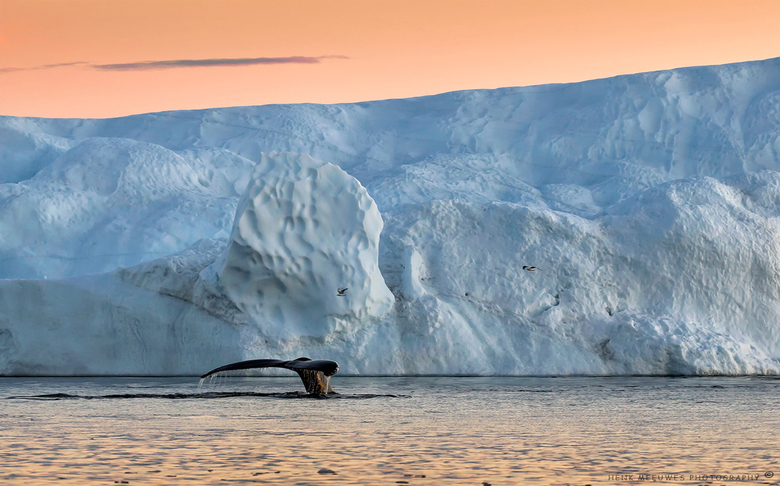 Follow the whales - Na een avondwandeling op land nog snel een bonus tripje aangeboden gekregen van Albatros (Touroperator) richting de walvissen. Het