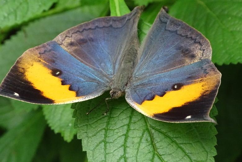 Prachtige vlinder in vlindorado -
