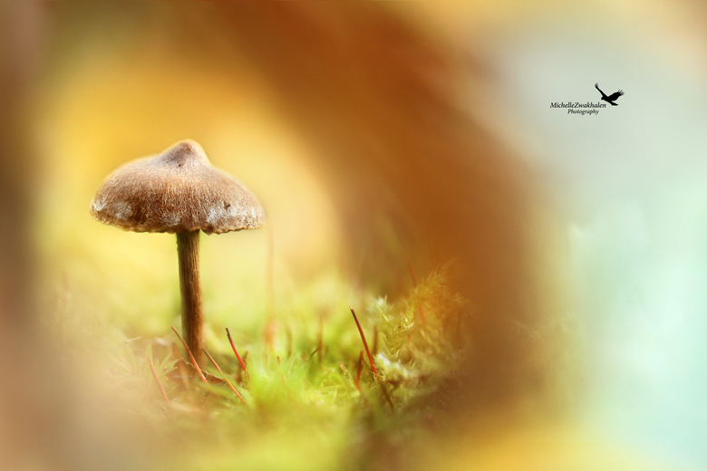 Enchanting mushroom