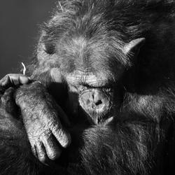 dreaming monkey