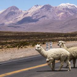 Goed uitkijken - Peru