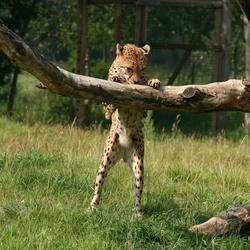 zoo overloon